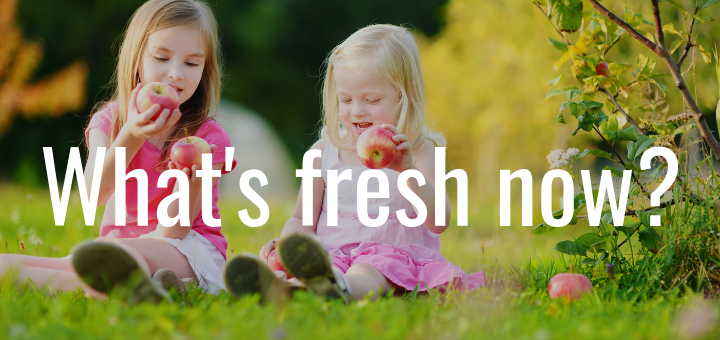 What's Fresh Now?